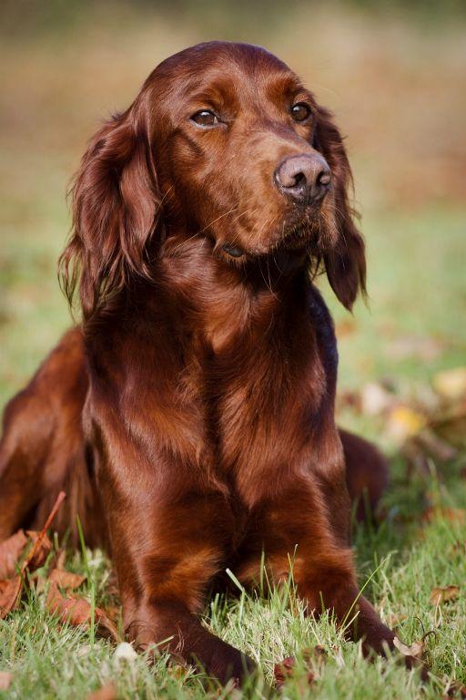 hundehvalpe til salg 2014